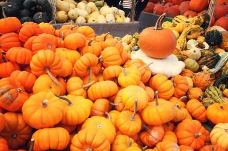 Jean-Talon Market, Montreal - Pumpkin fever, squash
