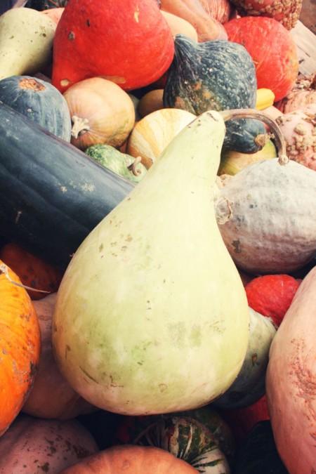 Jean-Talon Market, Montreal - squash variety