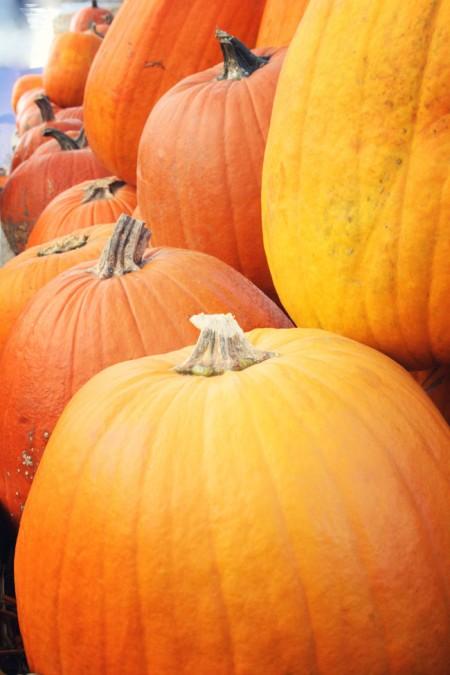 Jean-Talon Market, Montreal - halloween pumpkins