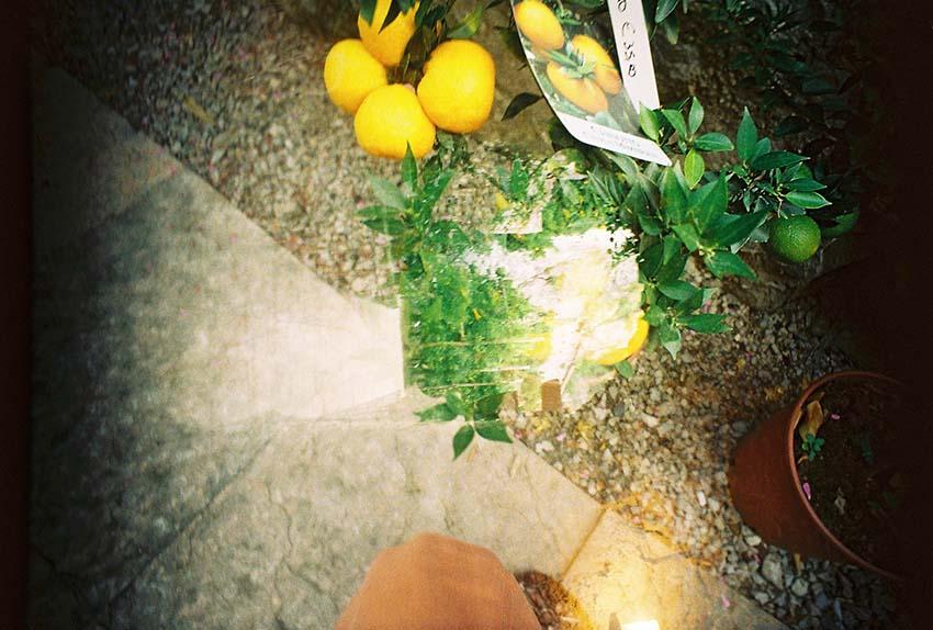 Lemon Gardens - Limone, Italy